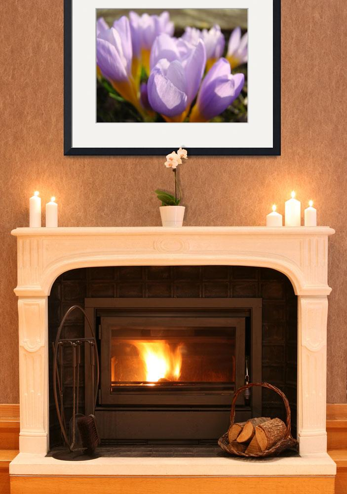 """Crocus Flower Spring Garden art prints Botanical&quot  (2014) by BasleeTroutman"