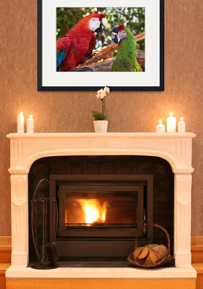 """Macaw Chat&quot  (2011) by mjphoto-graphics"