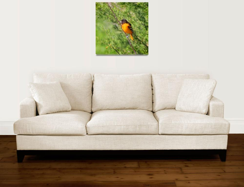 """Baltimore Oriole Bird Square format&quot  (2014) by KsWorldArt"