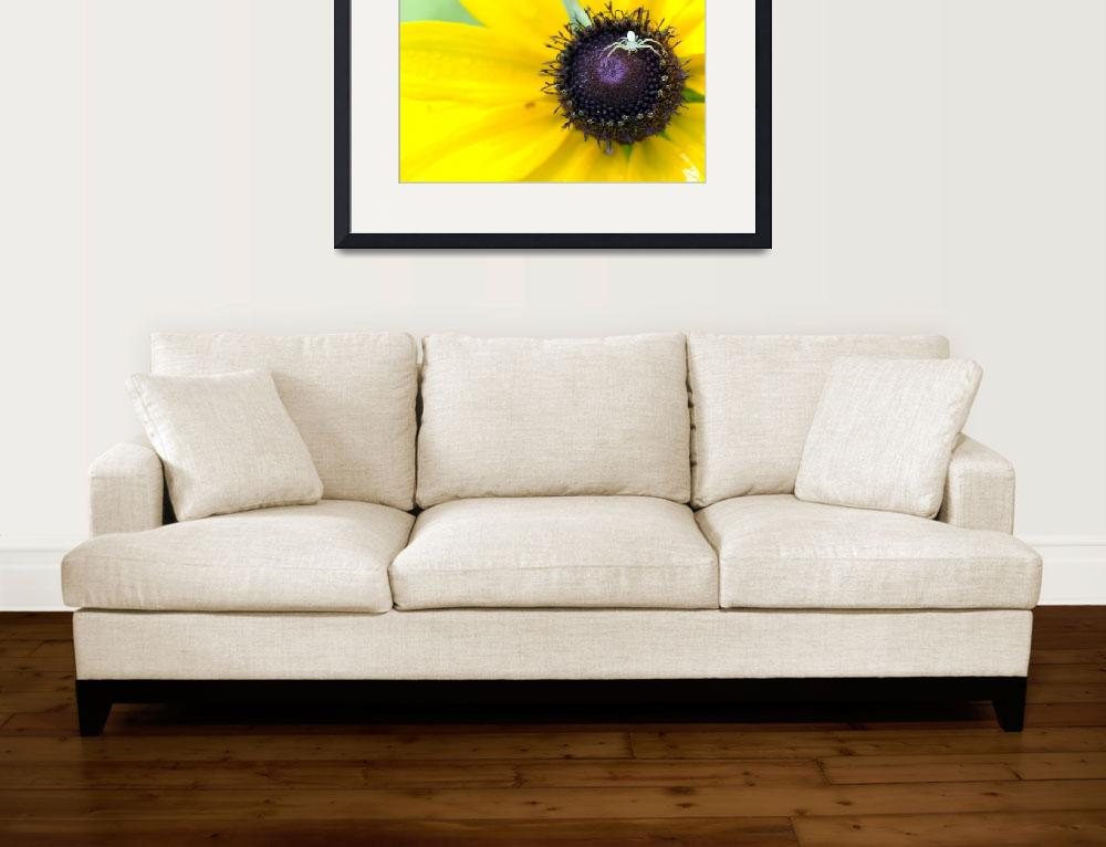 """Spider On Black Eyed Susan&quot  (2008) by liquidtree"