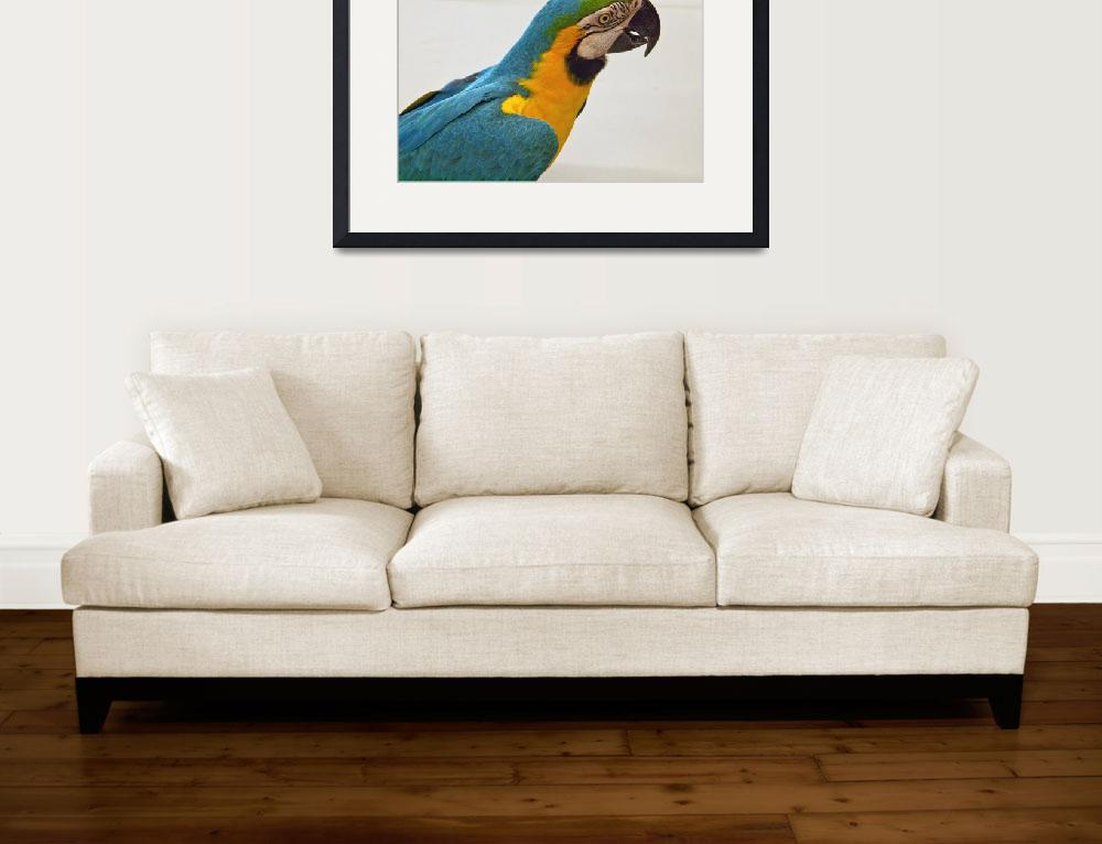 """Blue and Gold Macaw (1)&quot  (2011) by janesprints"