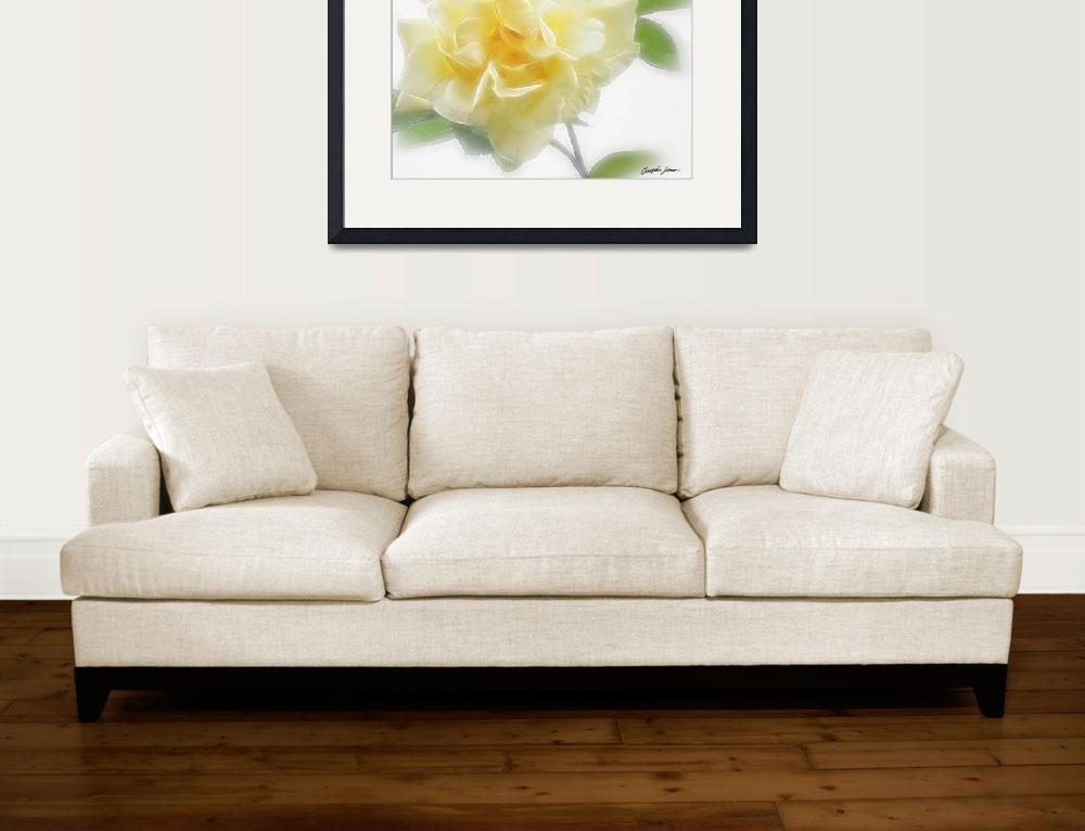 """Creamy Yellow Rose 2&quot  (2009) by ChristopherInMexico"