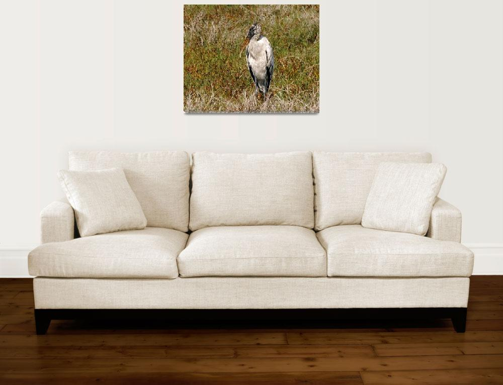"""Wood Stork Portrait&quot  (2005) by kphotos"