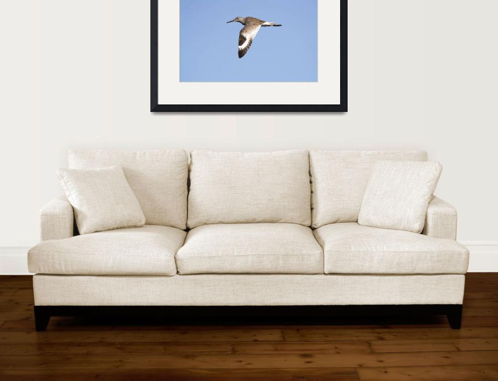 """Willet Photograph&quot  by ArtLoversOnline"