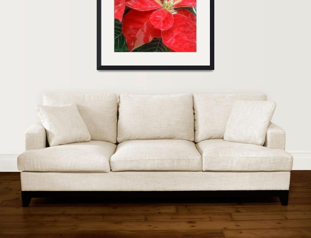 """Red Poinsettia&quot  by ChristopherInMexico"