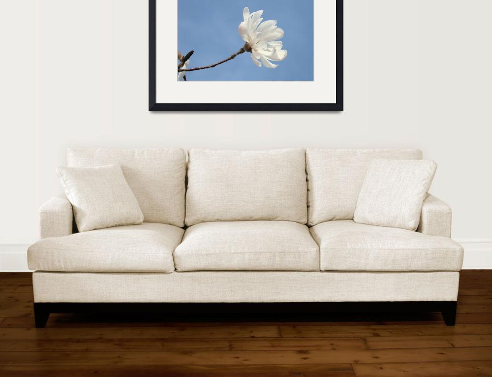 """Blue Sky Floral art White Magnolia Flower&quot  (2011) by BasleeTroutman"