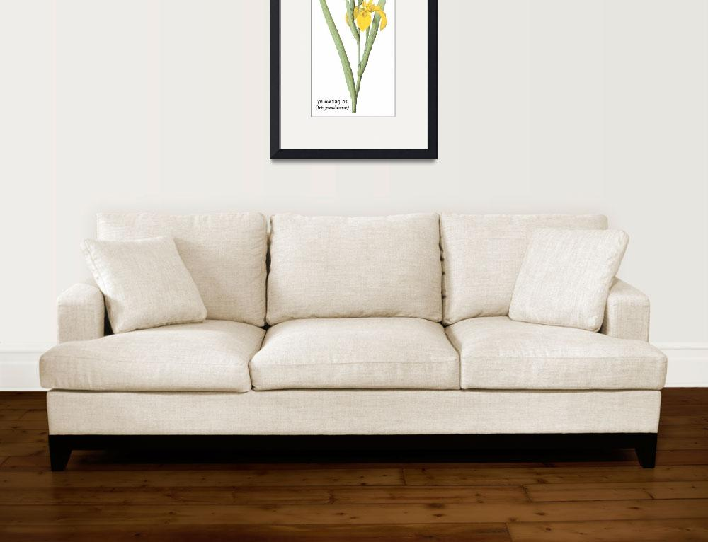 """Yellow Flag Iris (Iris Pseudacorus) Botanical Art&quot  by ArtLoversOnline"