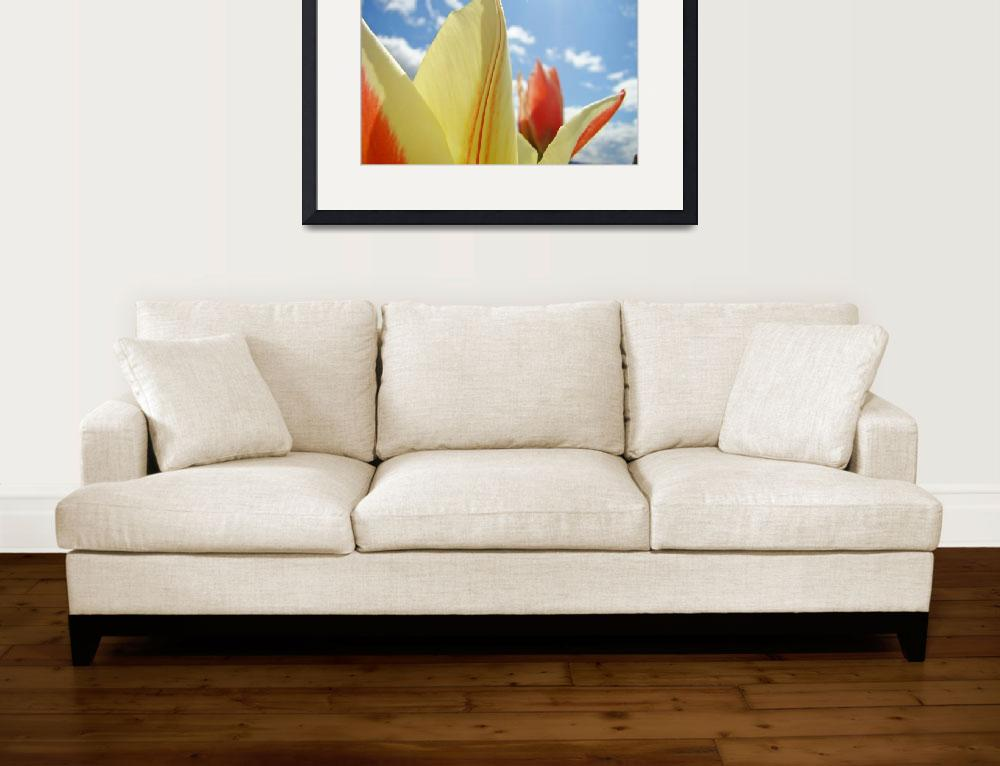 """Tulip Flowers art prints Blue Sky Floral&quot  (2010) by BasleeTroutman"
