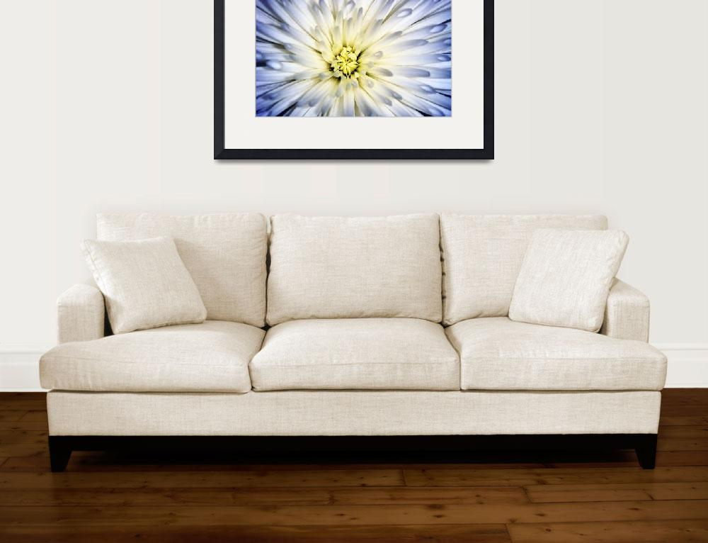 """White Fuji Mum&quot  (2010) by ldfranklin"
