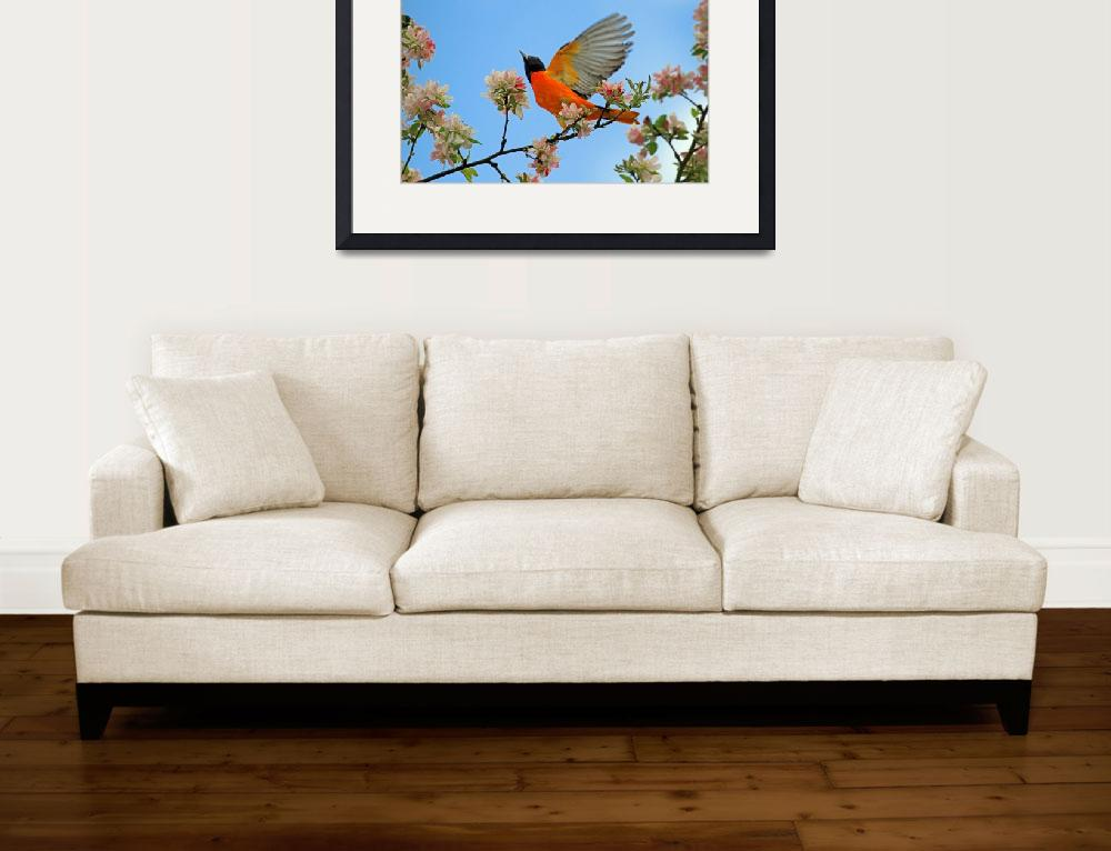 """Baltimore Oriole&quot  (2011) by shelshots"