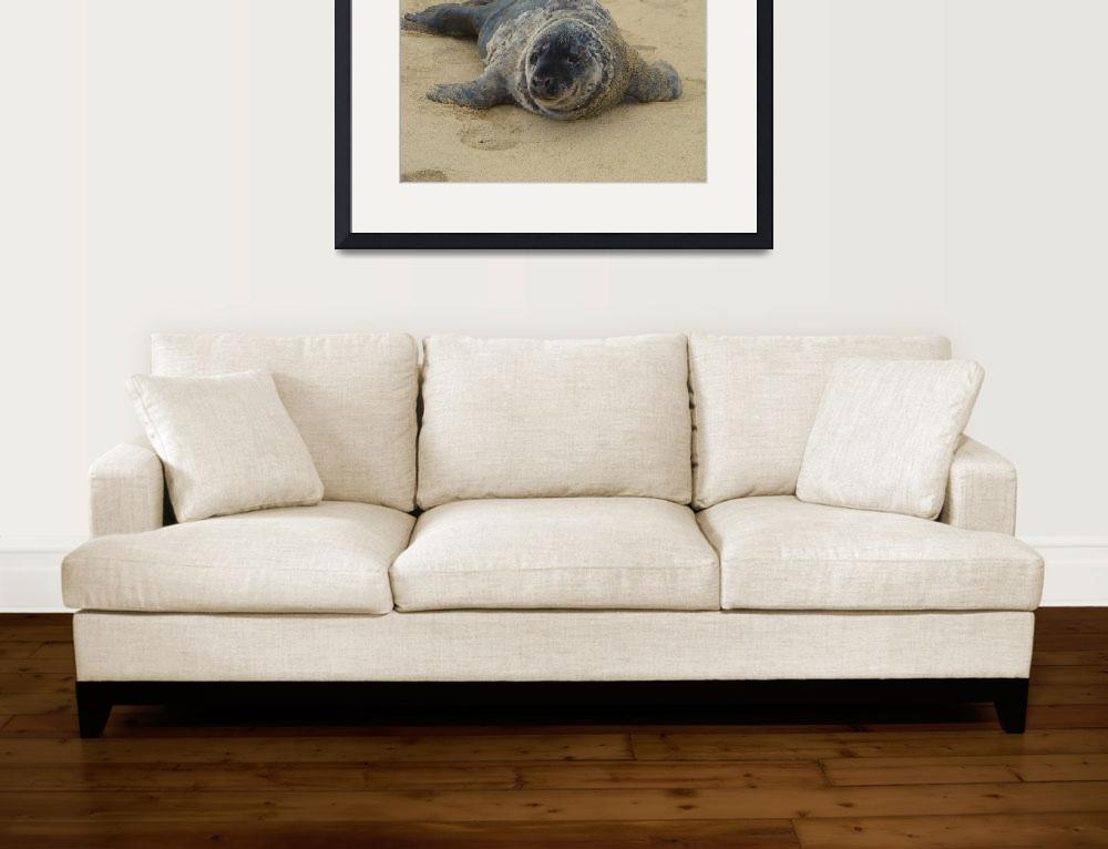 """Seal on Long Branch New Jersey Beach&quot  by Beautyunnoticed"