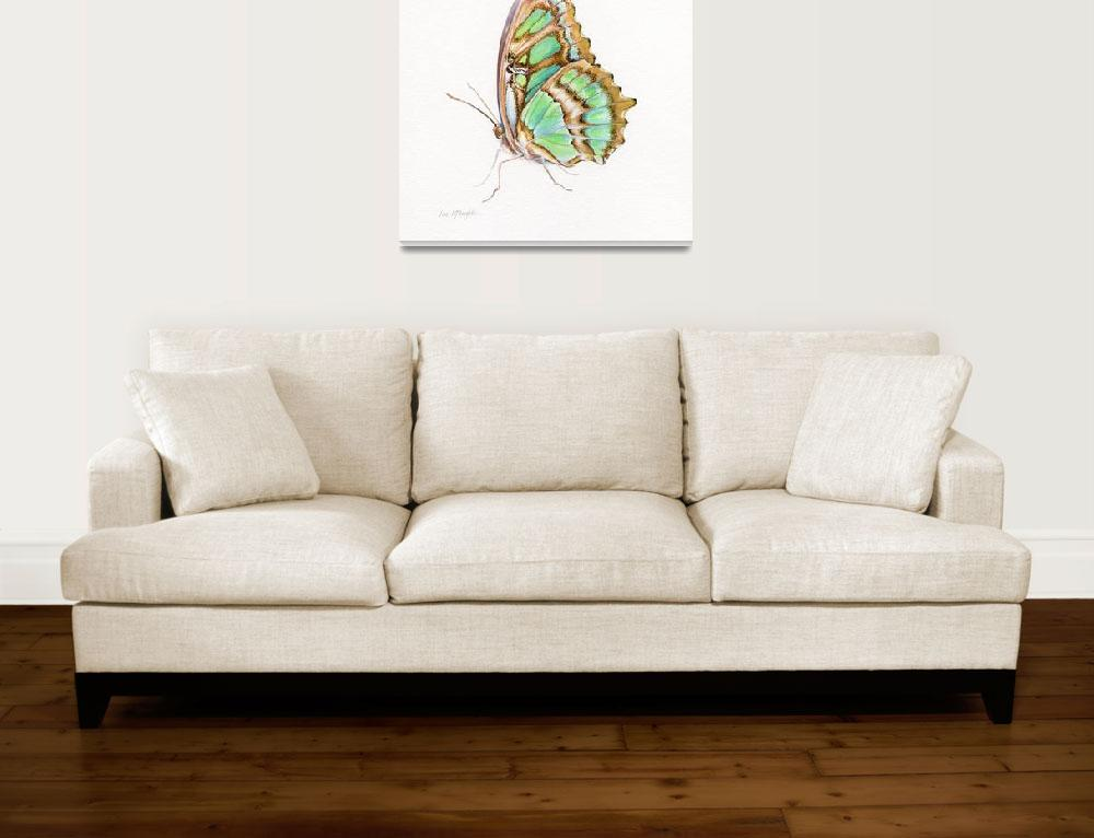 """Malachite butterfly perched&quot  by LisaMclaughlin"