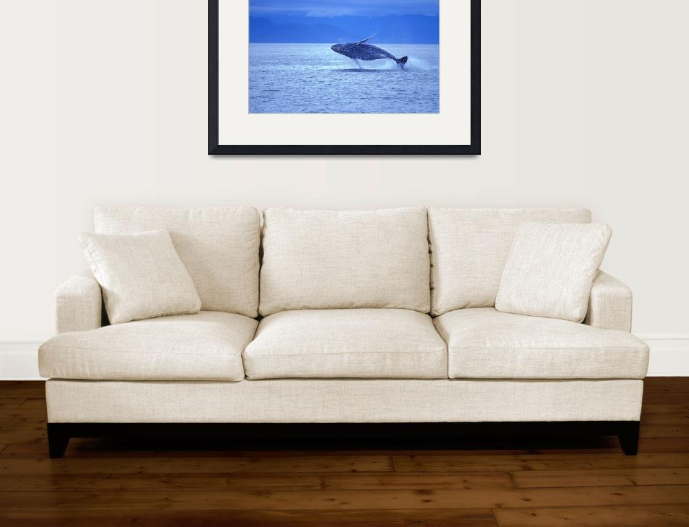 """Humpback Whale Breach&quot  by DesignPics"
