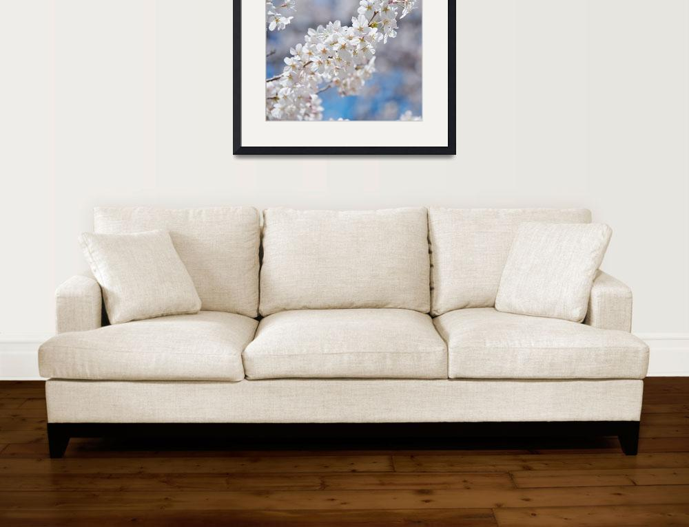 """Pure White&quot  (2011) by ImageArt-Photography"