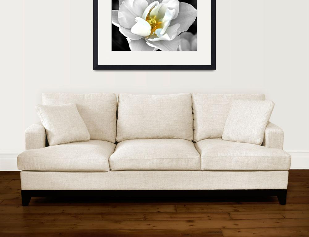 """White tulip&quot  (2012) by citrons"