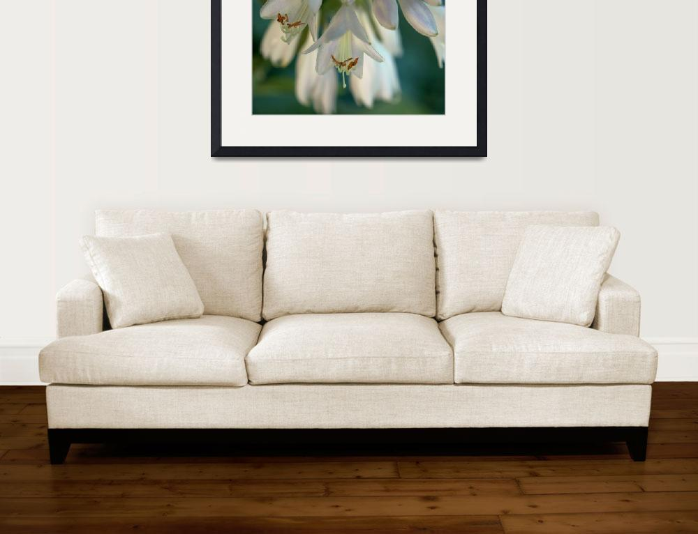 """Hosta Blossoms lV&quot  (2012) by bavosiphotoart"