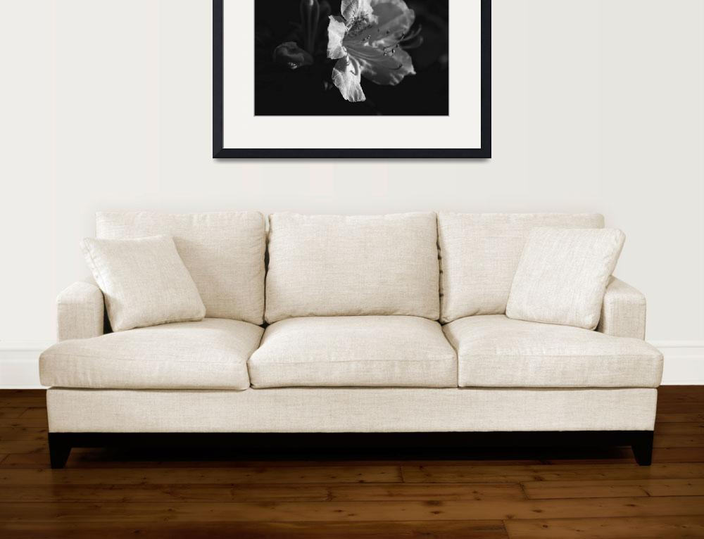 """Small Leaf Rhododendron&quot  (2012) by bavosiphotoart"