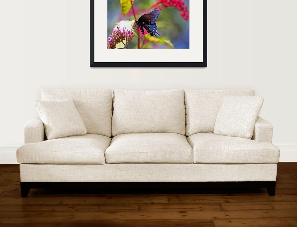 """Butterfly  Pipevine in Summer Garden&quot  (2012) by KsWorldArt"