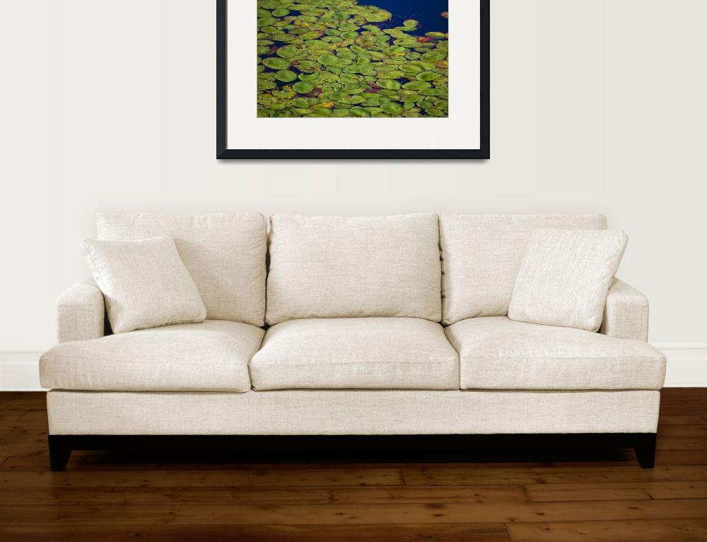 """Lily Pads&quot  (2007) by NaturesExpressions"