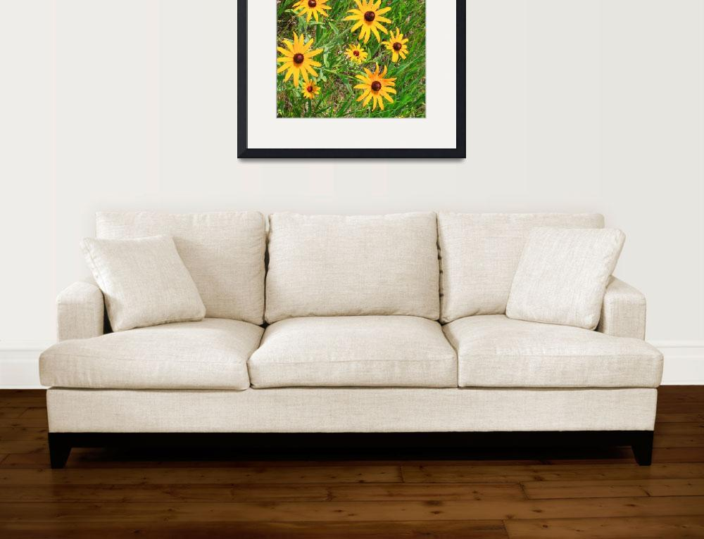 """Black-eyed susans by the roadside&quot  (2010) by kcmodb"