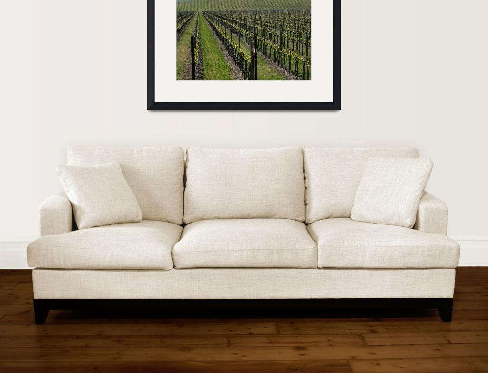 """central coast vinyard&quot  by planetlight"