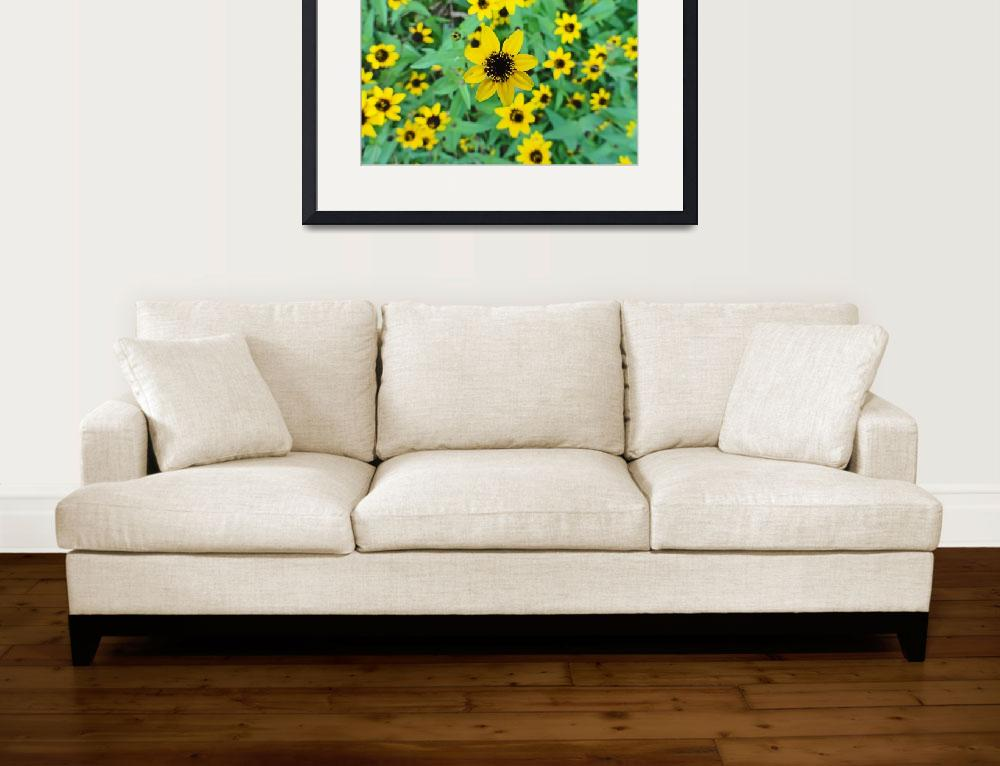 """Tropical Rudbeckia Triloba&quot  (2011) by robertmeyerslussier"