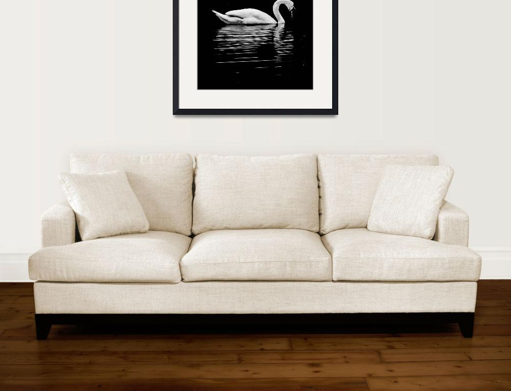 """Swan In Black And White&quot  (2009) by bavosiphotoart"