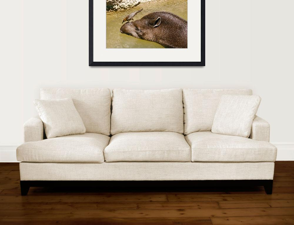 """Bird on Tapir&quot  (2000) by kphotos"