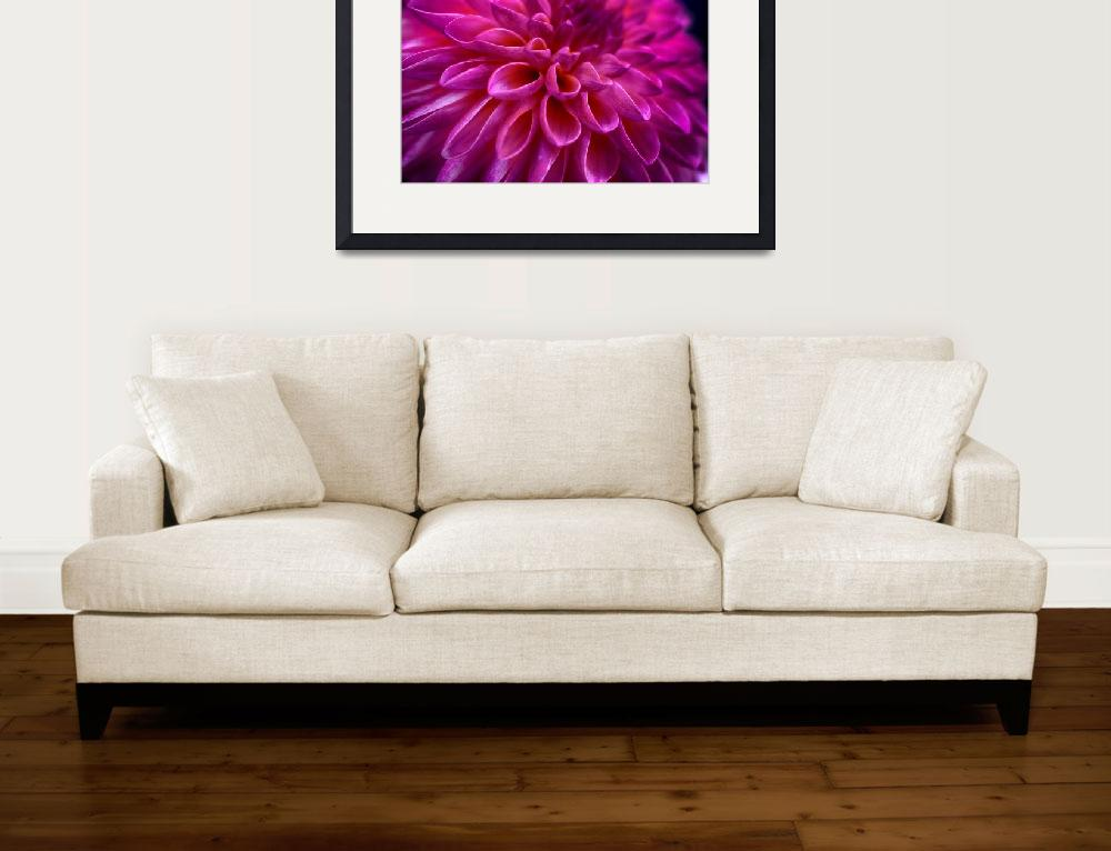 """""Perfect Pink"" Dahlia Flower&quot  (2013) by SoulfulPhotos"