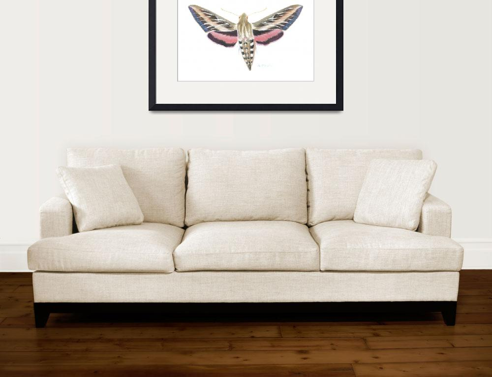 """White lined sphinx Moth&quot  (2008) by LisaMclaughlin"
