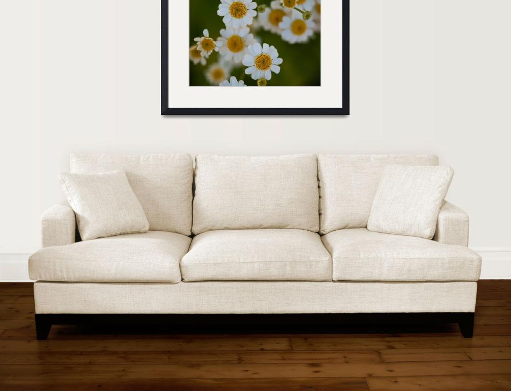 """DoF and Daisies&quot  by MBandy"