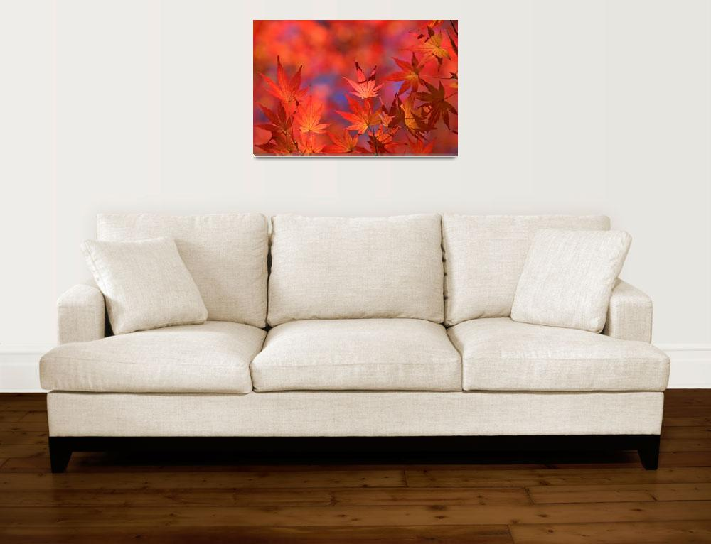 """Autumn Flames&quot  (2008) by ImageArt-Photography"