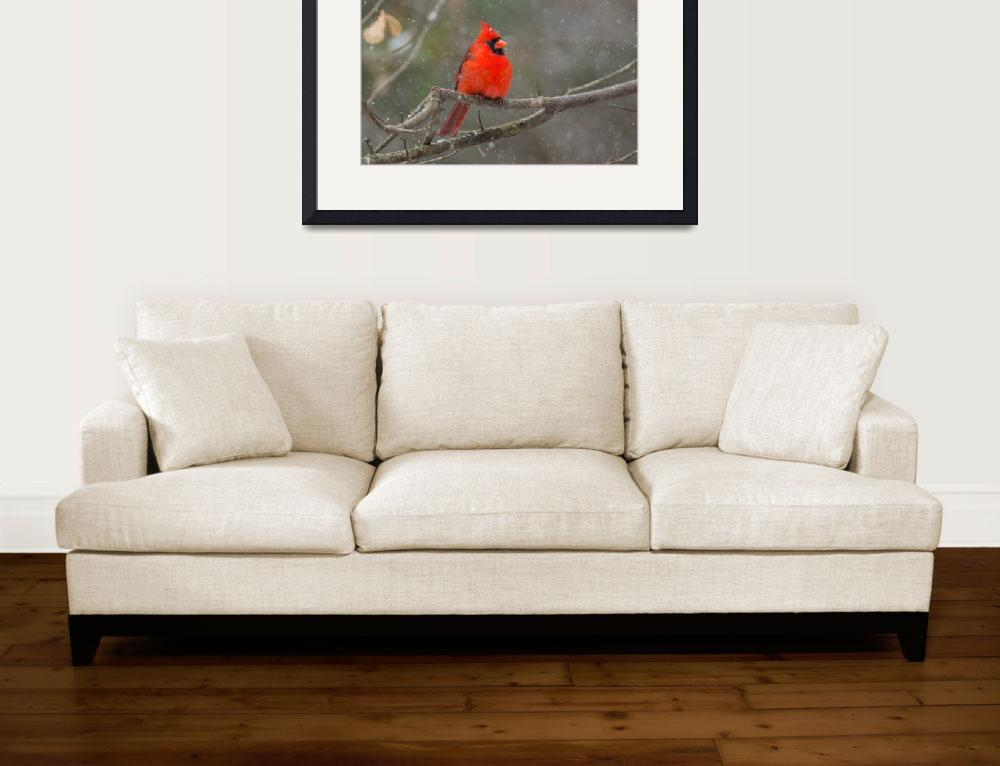 """Northern Cardinal in Snow Storm&quot  (2014) by NatureAsArt"
