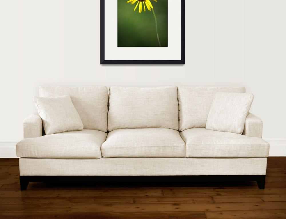 """Sunflower&quot  (2010) by rsummers"