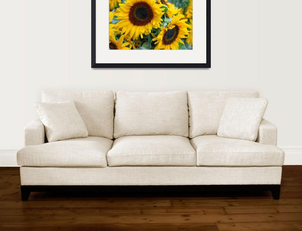 """Sunflowers&quot  (2003) by mg"