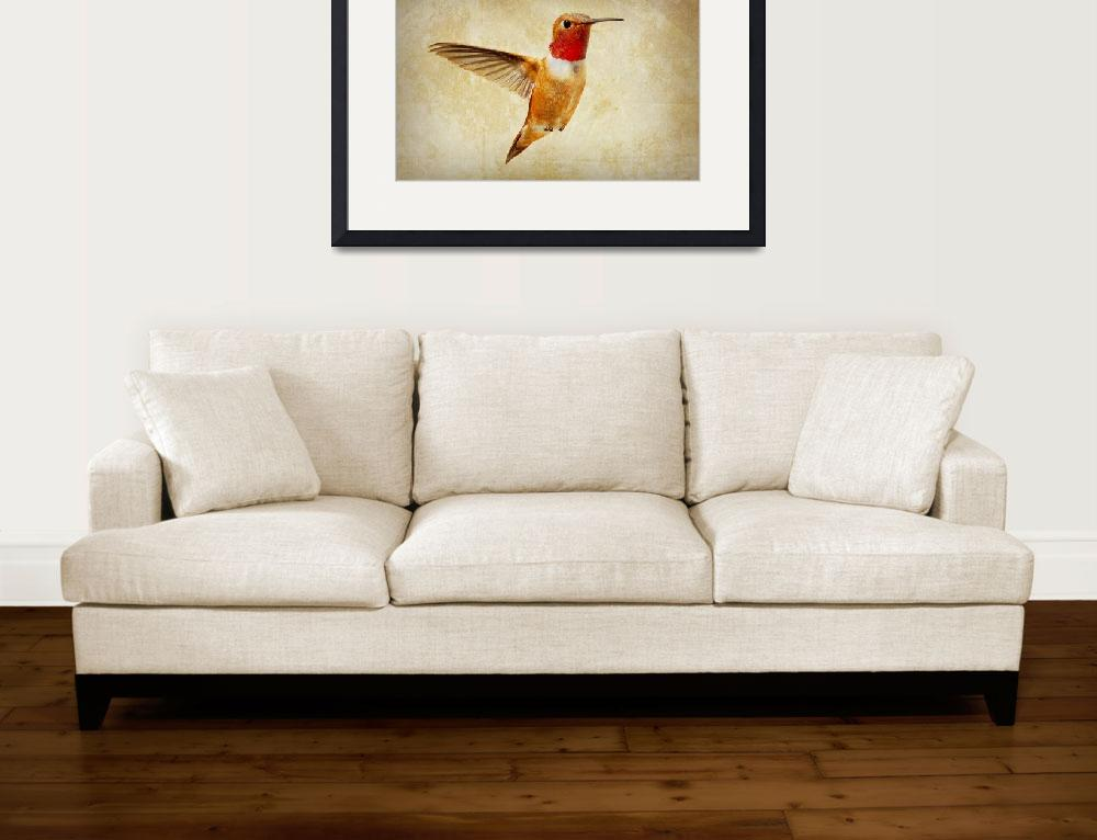 """Hummingbird #40&quot  (2009) by NatureVision"