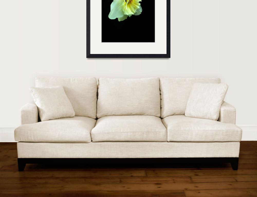 """Daffodil Pale Yellow&quot  (2014) by TRELDesign"