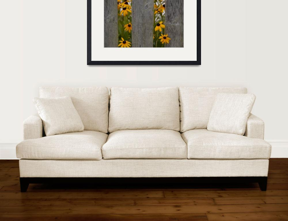 """Black Eyed Susans&quot  by snarkphoto"