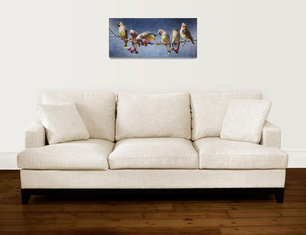 """a row of cedar waxwings&quot  (2013) by rchristophervest"