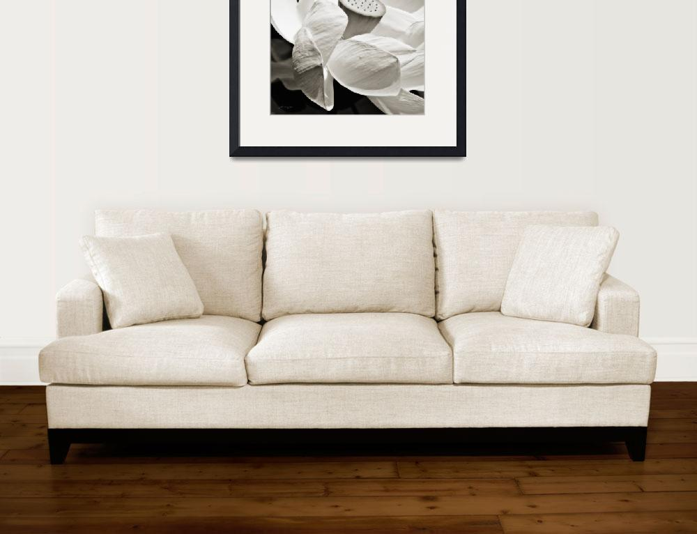 """Lotus Flower (Black and White)&quot  (2009) by johncorney"
