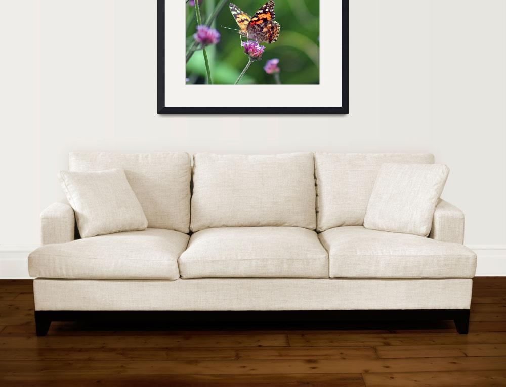 """American Painted Lady Butterfly&quot  (2012) by KsWorldArt"