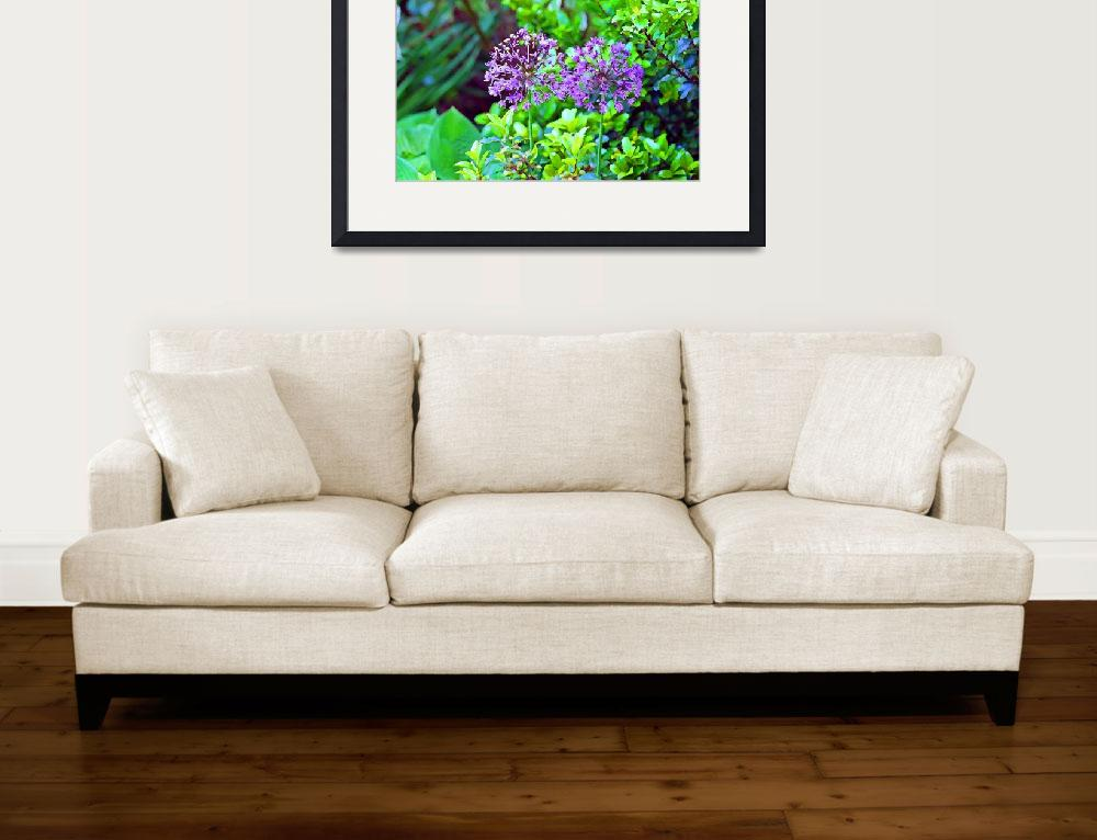 """Flowers   Two Allium Flower Heads&quot  (2011) by KsWorldArt"