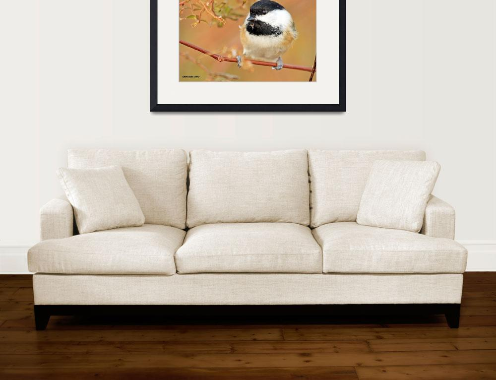 """Black-capped Chickadee&quot  (2012) by shelshots"