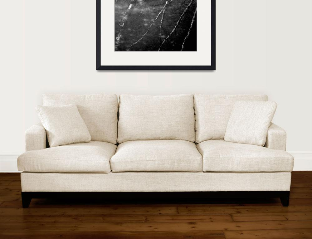 """Birch Reflection in Black and White&quot  (2010) by bavosiphotoart"