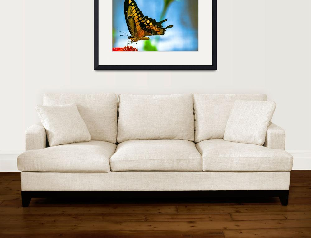 """Giant Swallowtail Butterfly #2&quot  (2014) by johncorney"