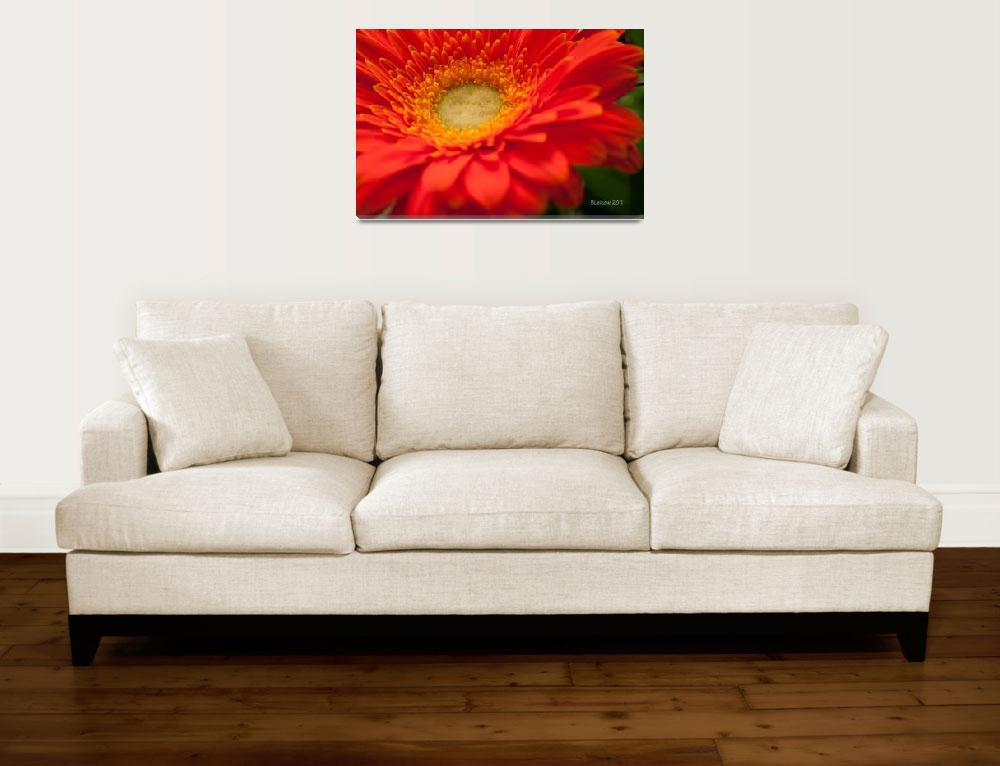 """The Gerbera from the Hot Place&quot  (2011) by bleij50"