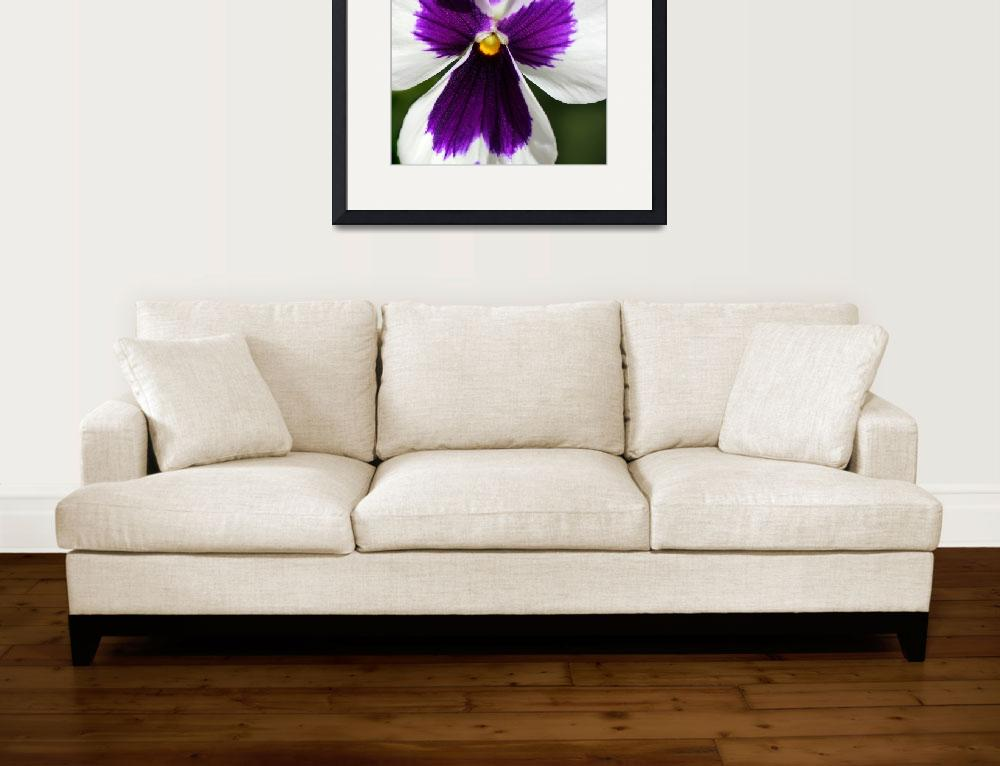 """Purple Pansy 2016&quot  (2016) by KsWorldArt"