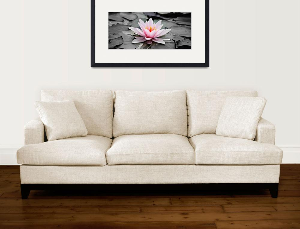 """Water Lily - ID 16217-202753-7789&quot  by lurksart"