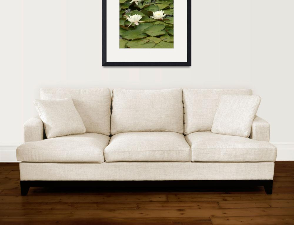 """Water Lilies in a Pond&quot  (2013) by rhamm"