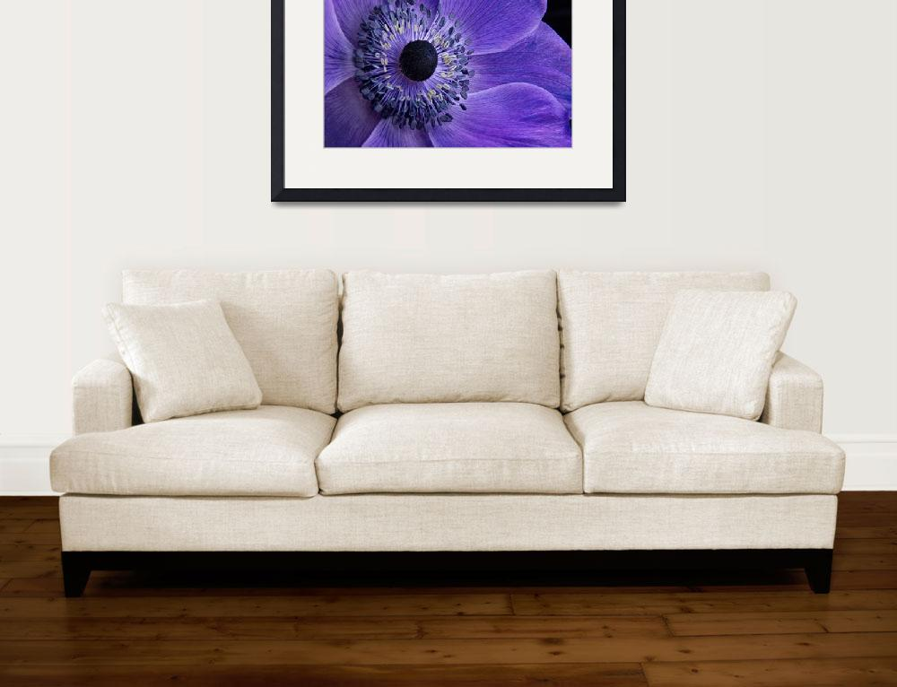 """Purple Anemone&quot  (2013) by AnnG"